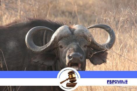 I ricorsi d'Ottobre sono davvero gratuiti? Attenzione alle bufale.
